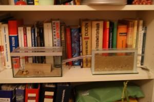 Farm und Arena im Bücherregal