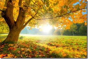 Herbstanfang - © Jag_cz - Fotolia.com
